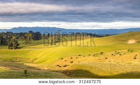 An image of a sunset landscape with cows in New Zealand