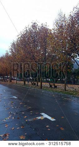 Hojas En E Piso De Un Parque O Plaza Con Lluvia