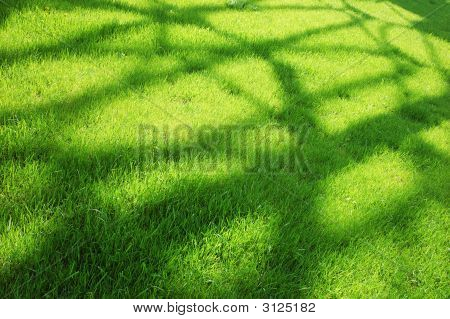 Shadow Over Green Grass