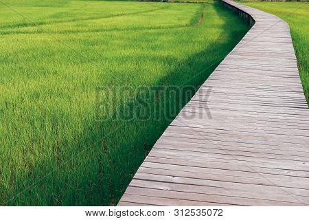 Wooden Bridge Footbridge Walkway Pathway Along Rice Paddy Field