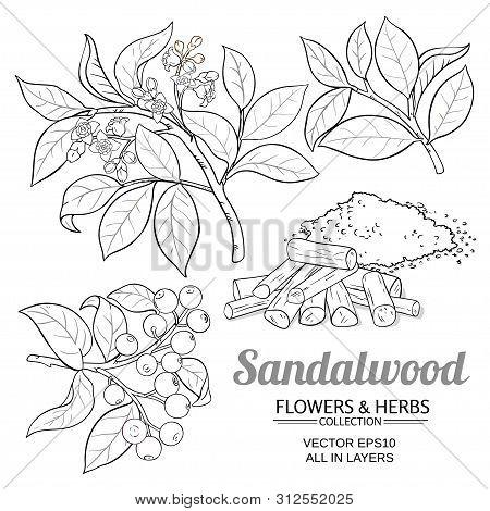 Sandalwood Plant Vector Set On White Background