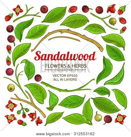 Sandalwood Branches Elements Vector Set On White Background