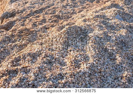 Backgroung Of Shells At The Sea Shore.