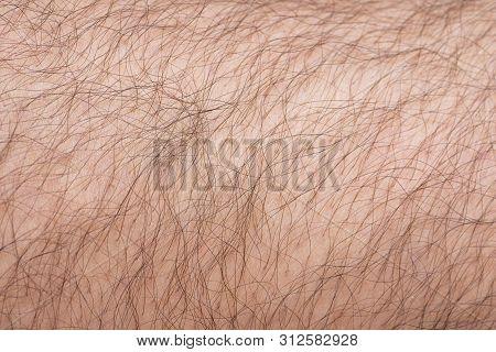 Closeup To Hair Arm Of Man Skin As Background