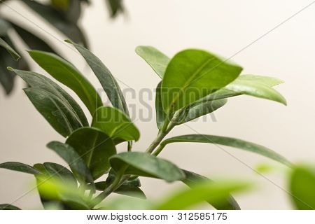 Closeup To Green Plant Or Tree Leafs Growth