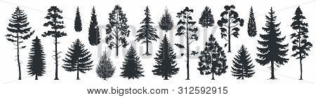 Pine Tree Silhouettes. Evergreen Forest Firs And Spruces Black Shapes, Wild Nature Trees Templates.