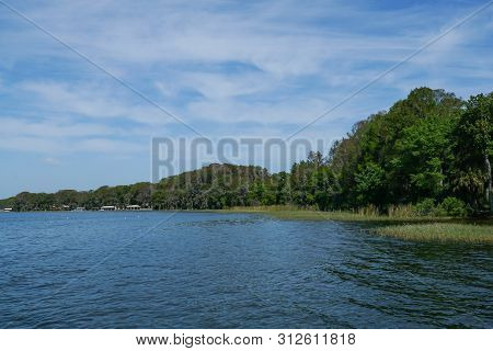 A Lake View With Trees And Grass In Water On A Lake Eustis In Florida.