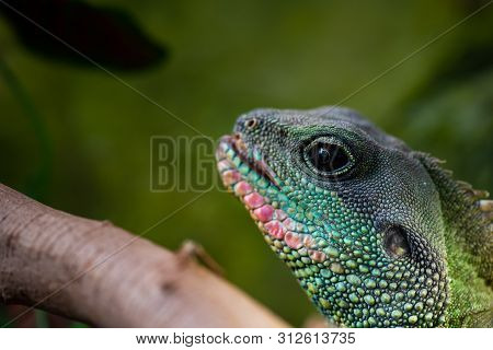 Nice Green Lizard Iguana Head Portrait Close Up Macro Reptile Nature