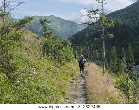 Men Hiker With Hat And Backpack Hiking On Path From Ziarska Dolina. Lush Green Grass, Spruce Trees A
