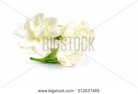 White Jasmine Flower Isolate On White Background