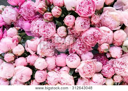 Floral Carpet Or Wallpaper. Background Of Pink Peonies. Morning Light In The Room. Beautiful Peony F