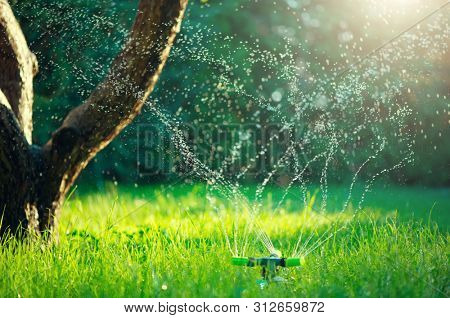 Garden, Grass Watering. Smart garden activated with full automatic sprinkler irrigation system working in a green park, watering lawn, flowers and trees. sprinkler head watering. Gardening concept