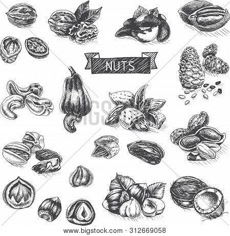 Vector Background Sketch Walnuts, Peanut, Cashew, Hazelnut, Almonds, Pistachio Nut.