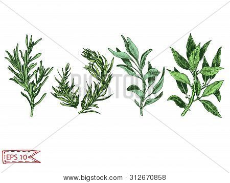 Vector Hand Drawn Colorful Illustration With Herbs.