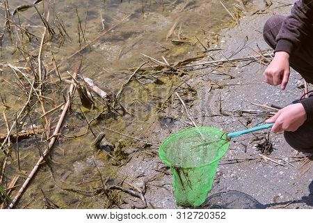 Boy Is Walking On The Riverbank. He Is Catching Frogs On The River Using Butterfly Net But It Jumps
