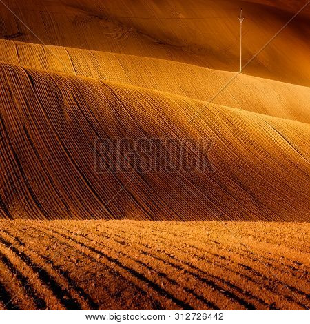 Rolling Fields Of Southern Moravia. Golden Morning Hour, Serene, Calm, Tranquil Agriculture Farmland