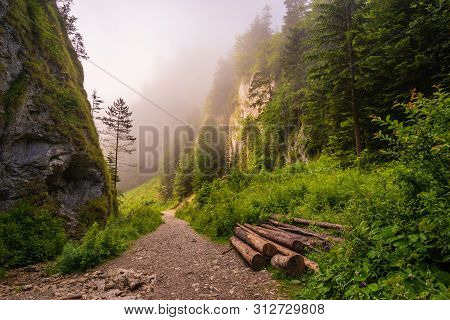 Hiking Trail In The Mountains Leading Through The Gorge On A Foggy Morning-the Szopczański Gorge (pr