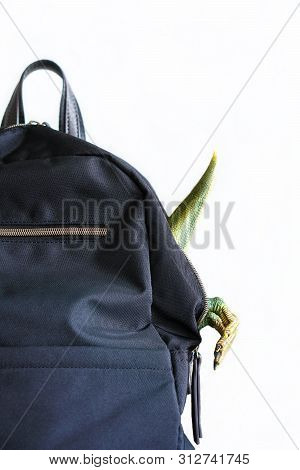 Black Backpack With Protruding Legs Of Toy Dinosaur Isolated On White Background