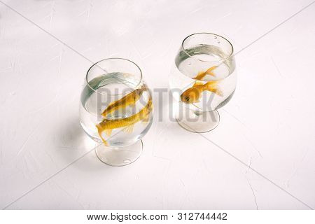 Separate Glasses With Goldfish. Two Golden-colored Fish Swim In The Water. Lonely Fish In Glasses On