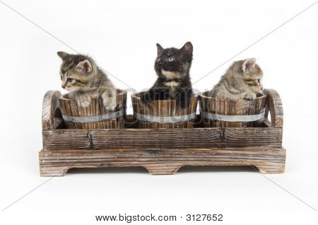 Three kittens peek over the edge of wooden flower pots on white background poster