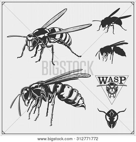 Wasp1.eps