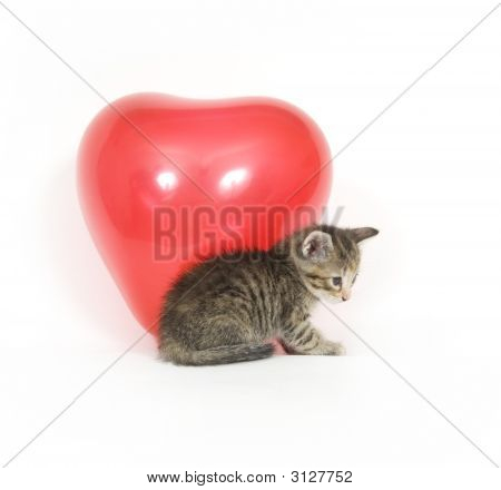 A kitten plays with a red heart shaped Valentines Day Balloon on white background poster