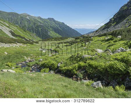 Beautiful Mountain Landscape With Water Stream Creek, Lush Grass, Spruce Trees, Dwarf Scrub Pine And