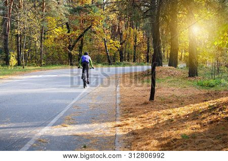 Cyclist In Protective In Autumn Coniferous Forest . Riding On Bike On Sunny Day Among Many Trees. He