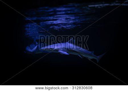 Nice Big White Shark In The Dark Nature Danger Fish Aquarium Hobby Attack