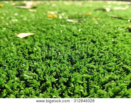 Fresh Green Grass Background, Close View Macro Photo With Blurred Edges. Natural Background Wallpape