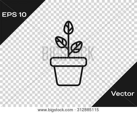 Grey Flowers In Pot Icon Isolated On Transparent Background. Pla
