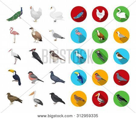 Types Of Birds Cartoon, Flat Icons In Set Collection For Design. Home And Wild Bird Bitmap Symbol St
