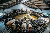 Robotic automatic industrial milking rotary system in modern diary farm. Carousel milking parlor. poster