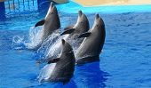 show Dolphins in the aquarium in Spain poster