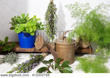 Still Life Of Aromatic Herbs On Wooden Table And Watering Can. Rustic Style. Gardening Culinary Herb