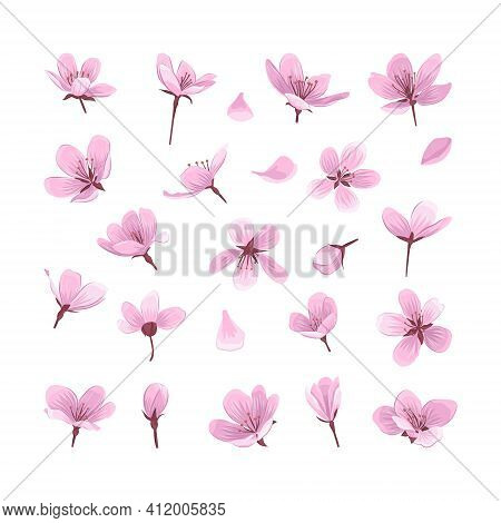 Pink Cherry Blossom Flowers Isolated On White Background.gentle Spring Blooming Flowers Collection F