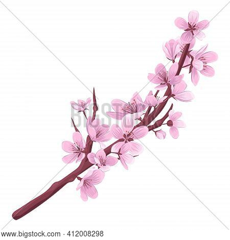 Cherry Blossom Branch Vector Illustration. Blooming Fruit Tree Branch Isolated On White Background.