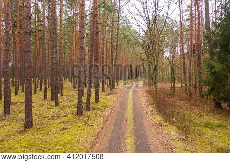Road, Forest, Ground, Unpaved, Paving, Needles, Brown, Forest, Coniferous, Pine, Needle, Green, Tall