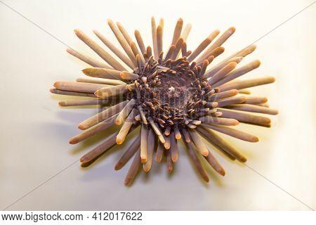 The Shell Of The Sea Urchin Heterocentrotus (latin: Heterocentrotus Trigonarius) With Sharp Needles