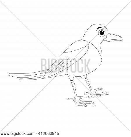 Magpie Bird Outline Illustration Set . Standing Crow Animal Ornithology Design. Vector Clip Art Isol