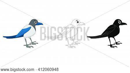 Magpie Bird Cartoon Illustration Set . Standing Crow Animal Ornithology Design. Vector Clip Art Isol
