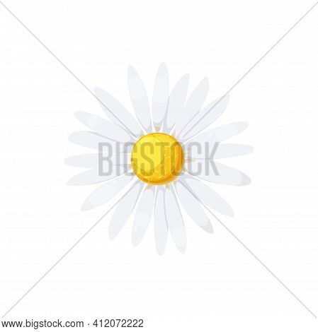 Daisy Isolated Realistic Blooming Chamomile Icon. Vector Flower With White Petals And Yellow Center,