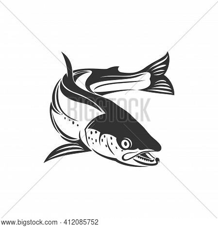 Atlantic Salmon Ray-finned Fish E Isolated Monochrome Icon. Vector Trout, Char, Grayling Whitefish F