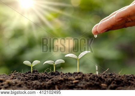 Plant Maintenance And Water The Seedlings That Grow In Order Of Germination On Fertile Soils, Concep