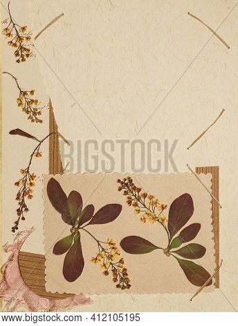 Page From An Old Photo Album. Flowers Barberry. Scrapbooking Element Decorated With Leaves, Flowers