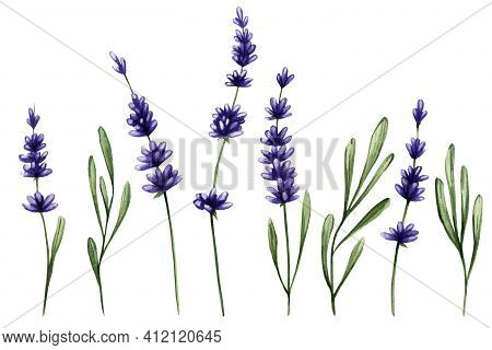 Watercolor Sprigs Of Purple Lavender And Leaves. Spring Set Of Lavender Flowers For Stickers, Design