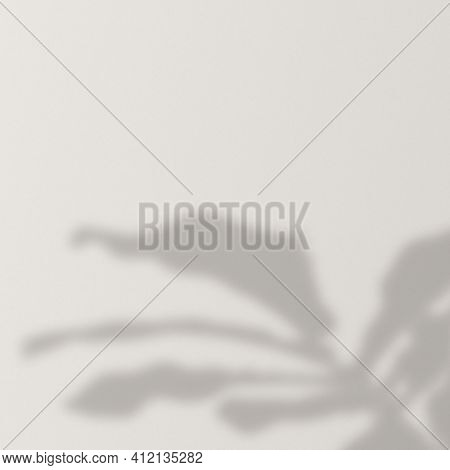 Background with shadow of a monstera tree