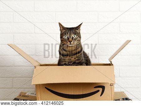 Bergamo, Italy, 5 march 2021: cat inside Amazon cardboard boxe on white brick wall background.