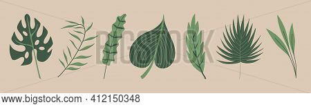 Set Of Seven Tropical Leaves - Palm, Banana, Monstera. Hand Drawn Elements Isolated On Backgroud