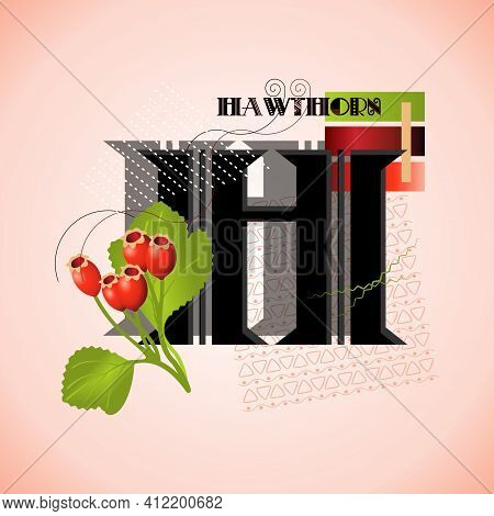 The Letter H And Hawthorn On A Bright Abstract Background